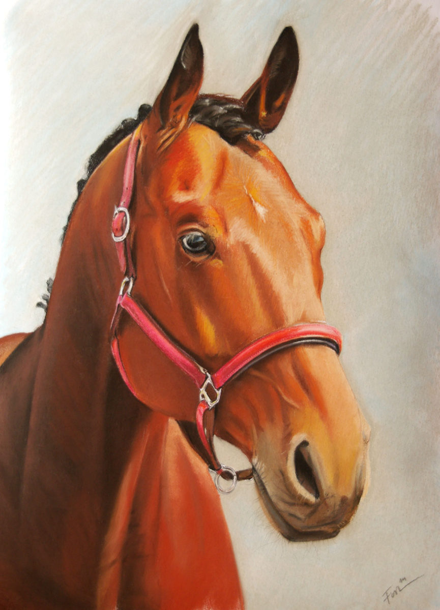 Portrait from photo - soft pastel drawing of a horse