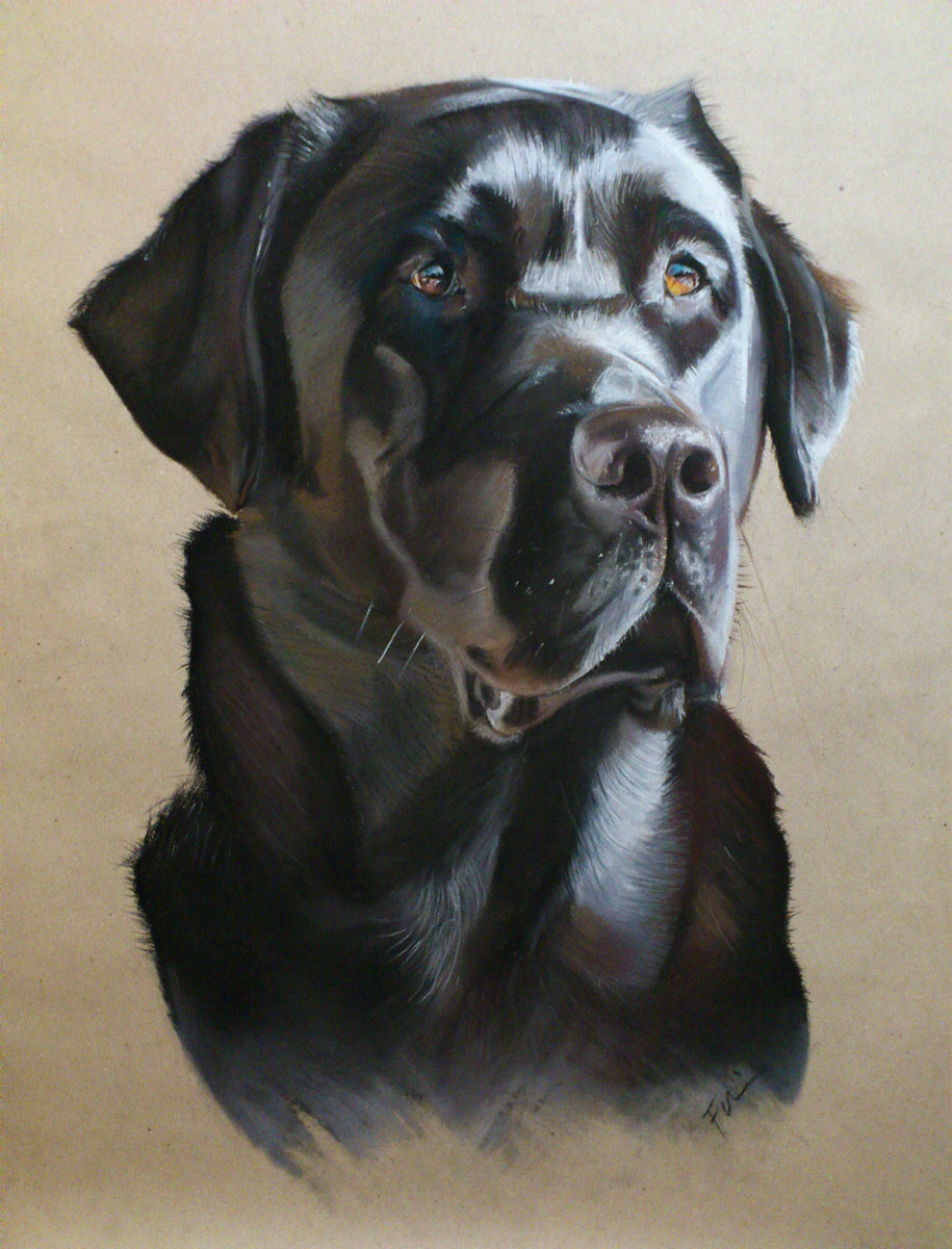 portrait from photo - dog painting, soft pastel